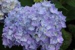 Decatur Blue